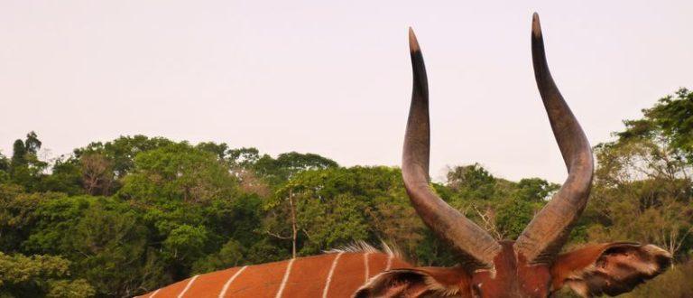 Article : Que reste-t-il du tourisme en Centrafrique?