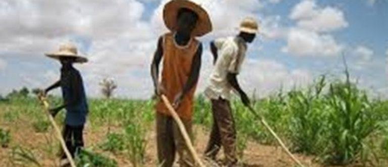 Article : Centrafrique : recommandations sur la grappe de croissance agricole