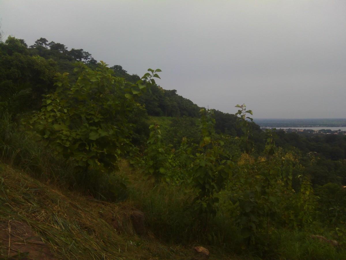 La verdure de Bangui en danger